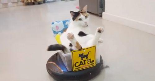 cat rides robot vacuum